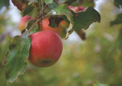 GG Äpfel-77