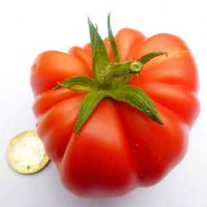 Tomaten und GemüsePflanzen
